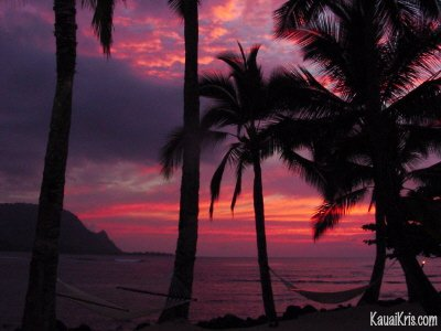 princeville_palms_sunset
